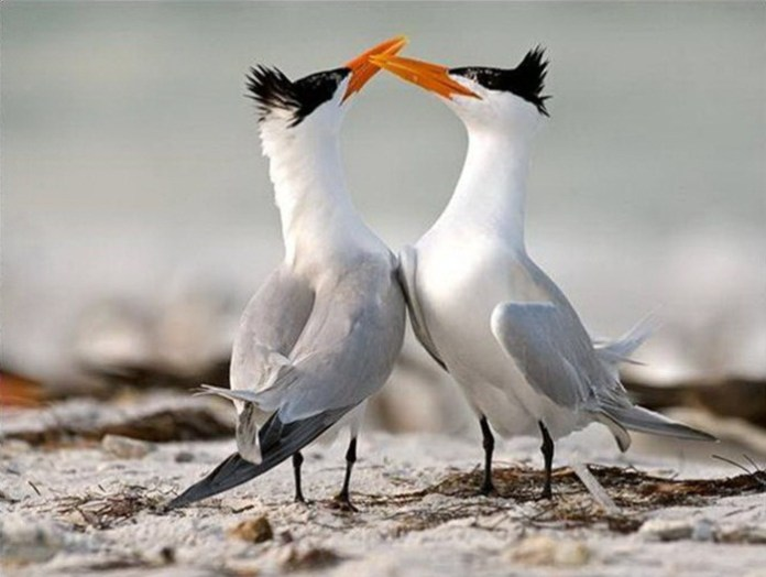 lovely-birds-couple-30-photos- (6)