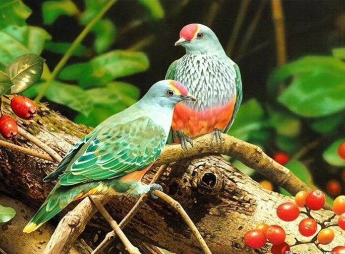 lovely-birds-couple-30-photos- (9)