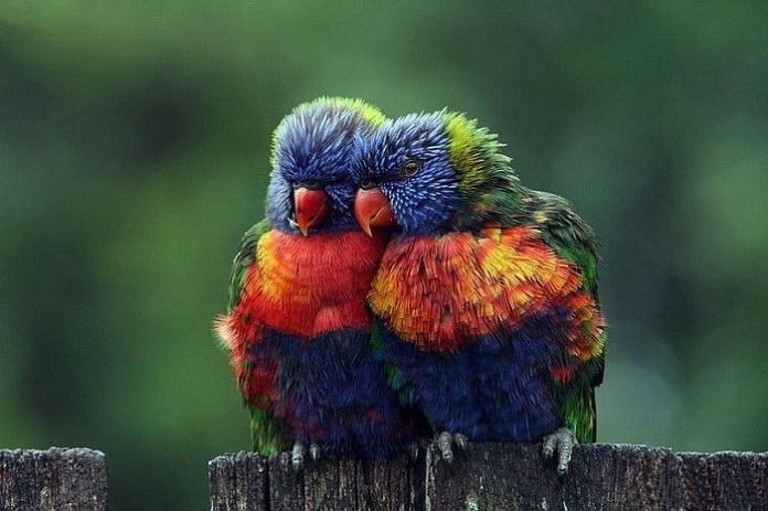 lovely-birds-couple-30-photos- (30)