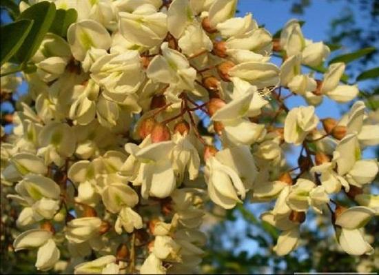 blooming-trees- (12)