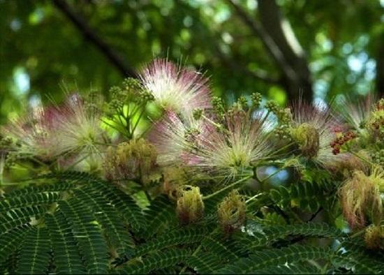 blooming-trees- (18)