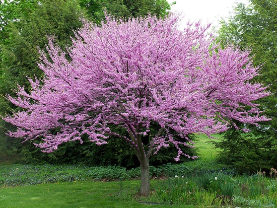 blooming-trees- (24)