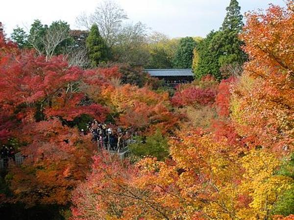 autumn-in-japan- (6)