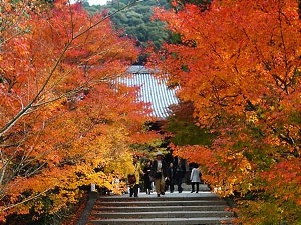 autumn-in-japan- (7)