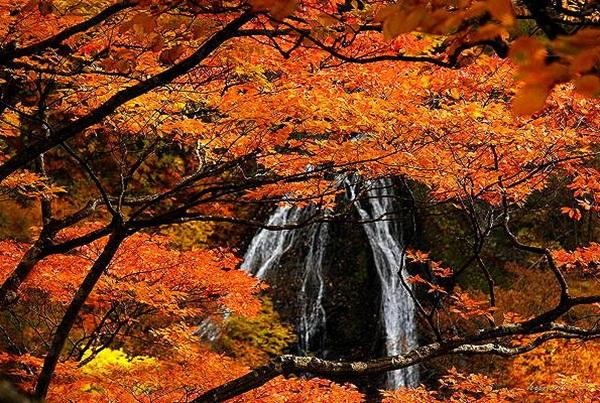 autumn-in-japan- (16)