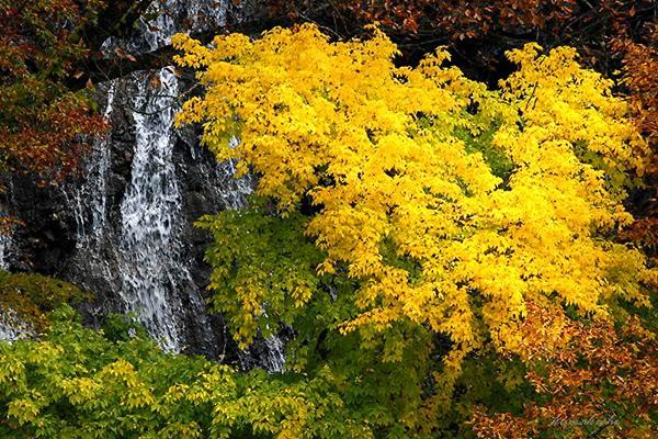 autumn-in-japan- (20)