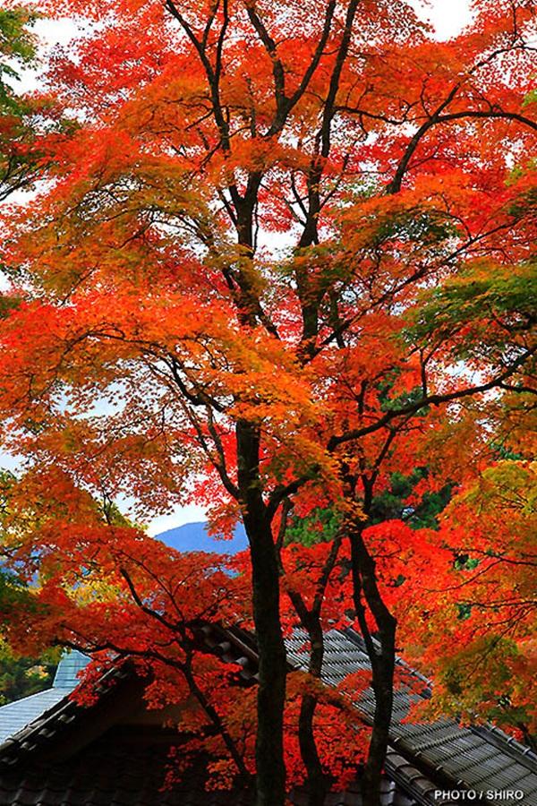 autumn-in-japan- (23)