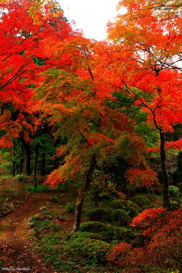 autumn-in-japan- (24)