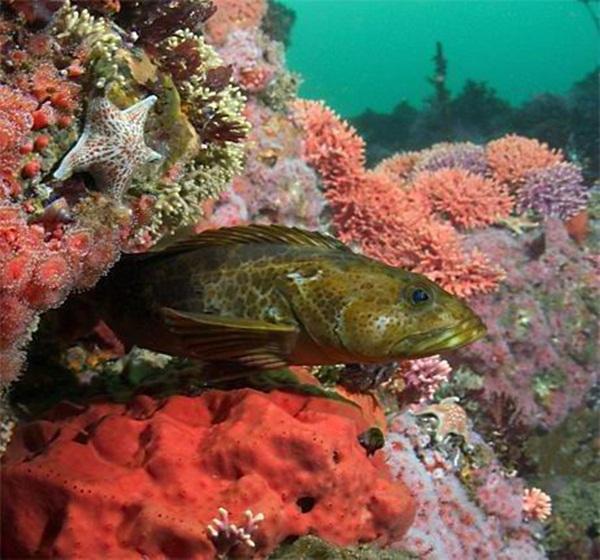 colorful-marine-life-25-photos- (1)