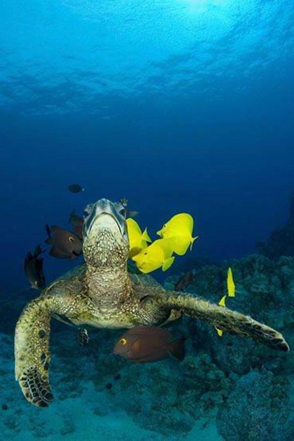 colorful-marine-life-25-photos- (3)