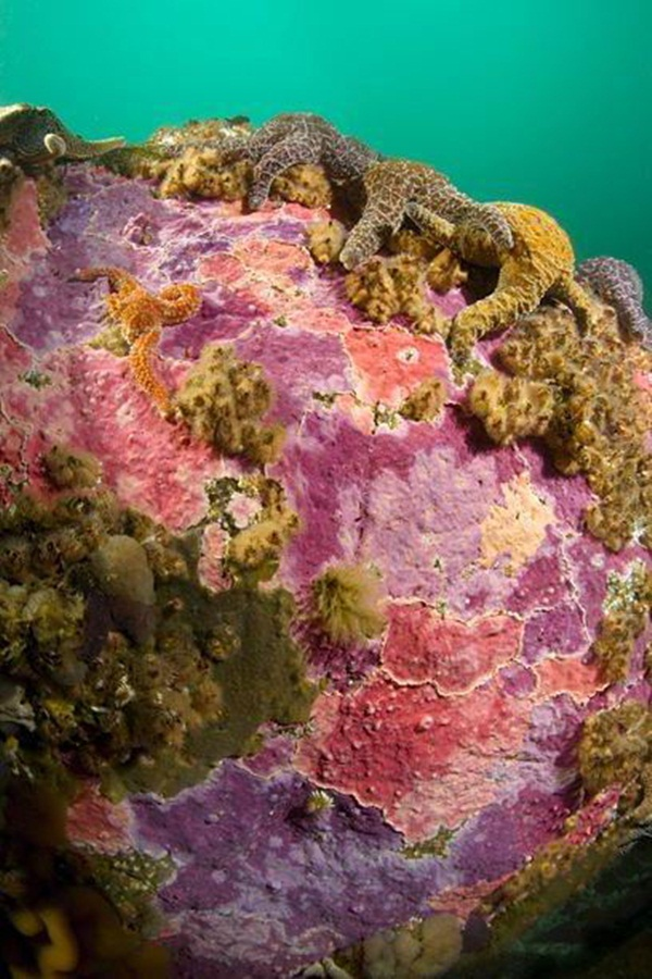 colorful-marine-life-25-photos- (6)