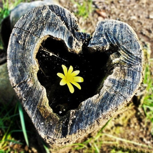 hearts-in-nature- (1)