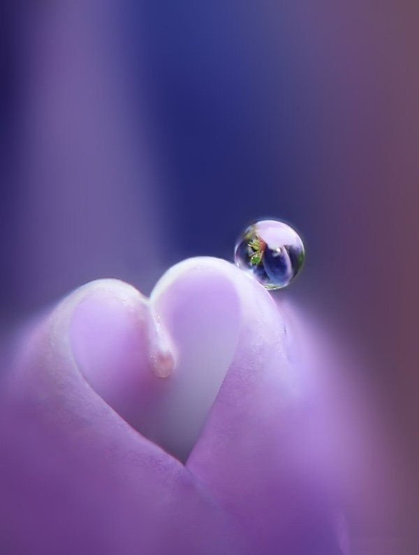 hearts-in-nature- (7)