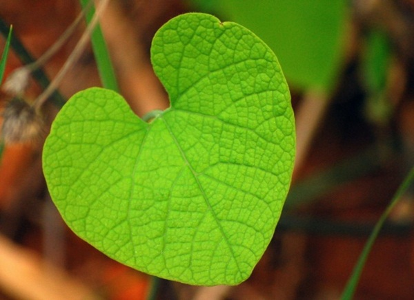 hearts-in-nature- (23)