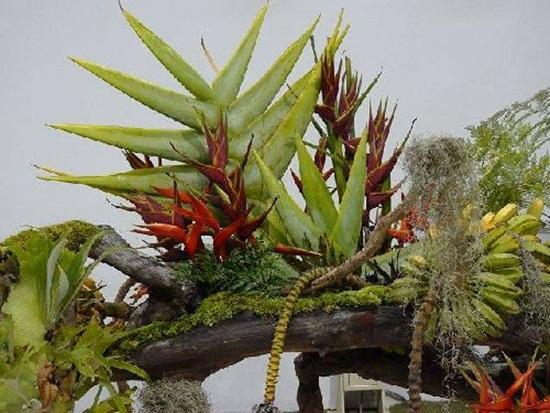 taipei-flora-exposition- (6)