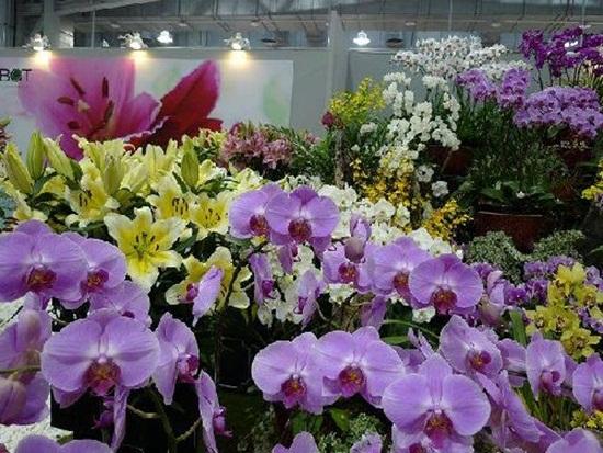 taipei-flora-exposition- (24)