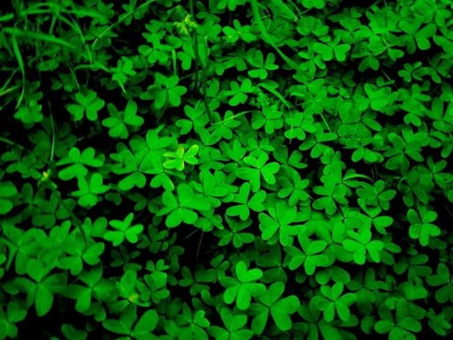 beautiful-green-nature- (16)