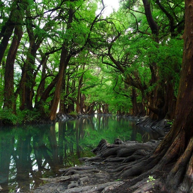 beautiful-green-nature- (20)