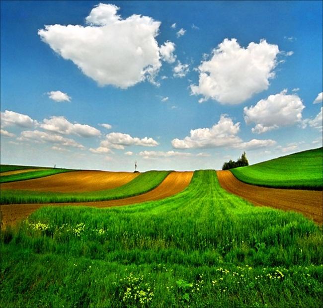 beautiful-green-nature- (23)
