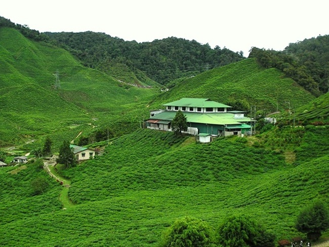 beautiful-green-nature- (28)