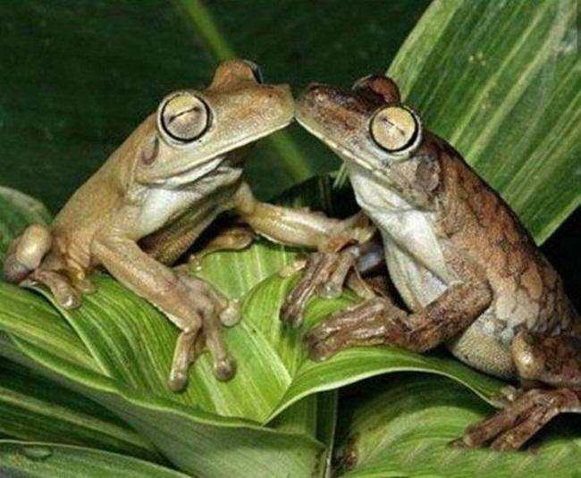 romantic-animals- (2)
