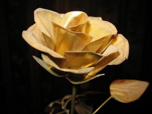 beautiful-flower-photos- (11)