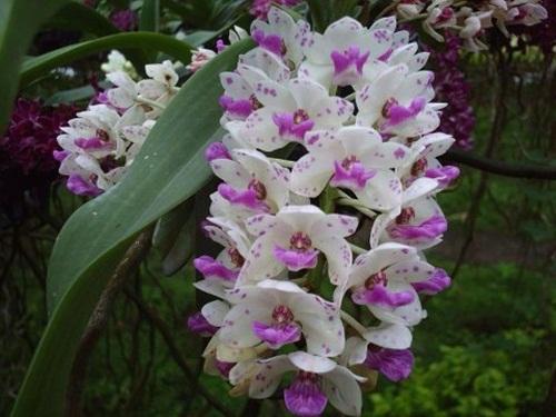 https://i0.wp.com/www.funmag.org/wp-content/uploads/2013/02/beautiful-flower-photos-14.jpg