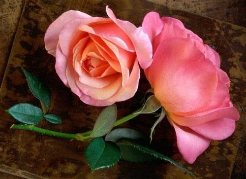 beautiful-flower-photos- (16)