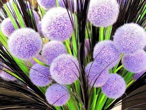 beautiful-flower-photos- (20)