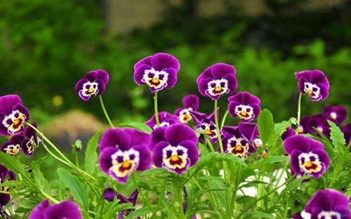 beautiful-flower-photos- (25)