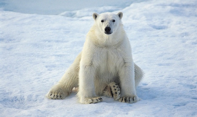 animals-planet-photos- (1)
