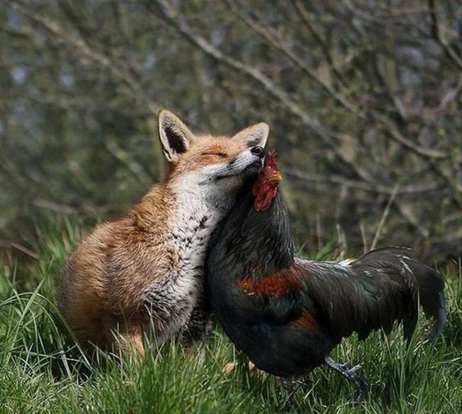 animals-planet-photos- (3)