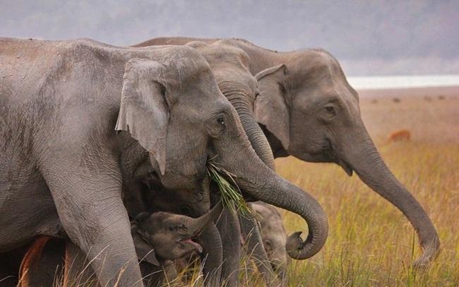 animals-planet-photos- (9)
