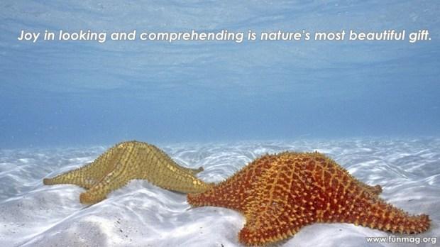 best-nature-quotes- (2)