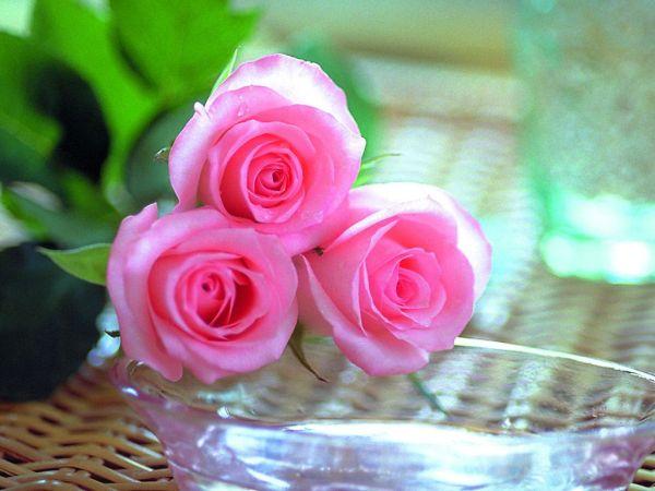 beautiful-roses-wallpapers-20-photos- (4)