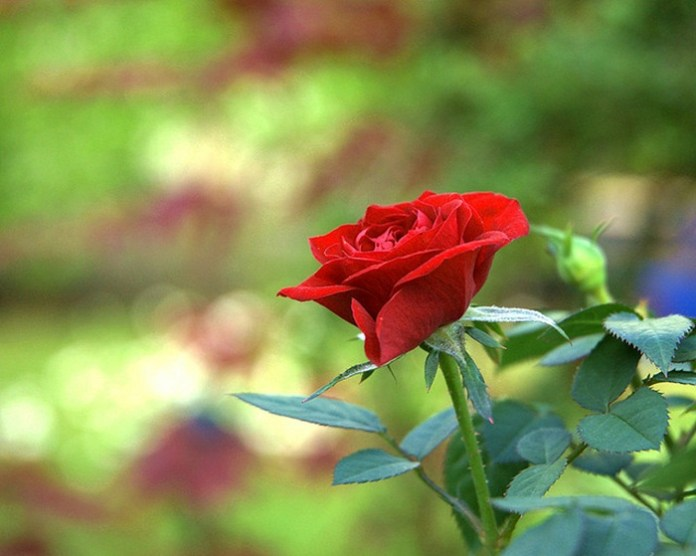 bloom-fresh-flowers- (14)