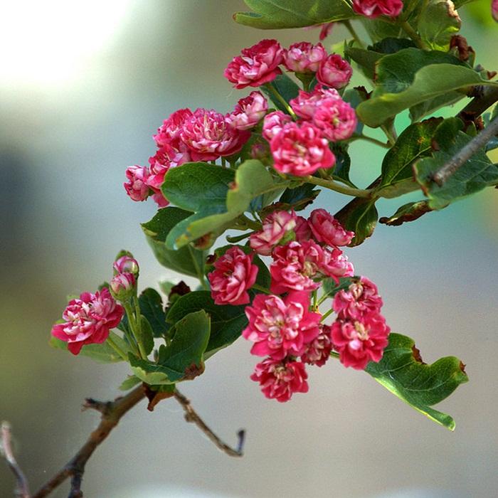 https://i0.wp.com/www.funmag.org/wp-content/uploads/2013/11/bloom-fresh-flowers-19.jpg
