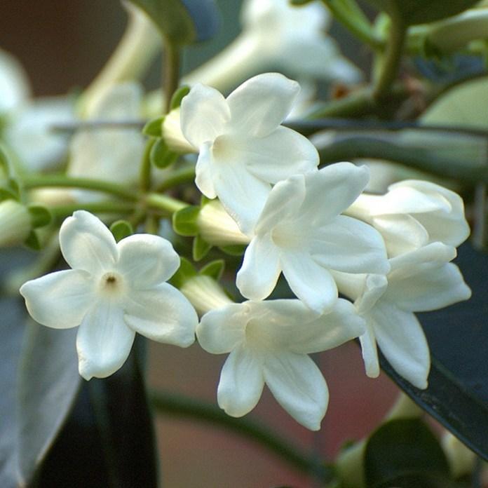 bloom-fresh-flowers- (20)