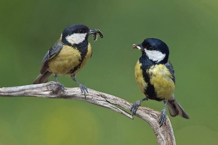 pictures-of-birds-after-successfully-hunted-their-food- (12)