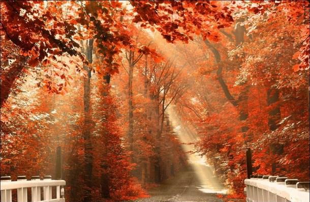 beautiful-autumn-wallpapers- (5)