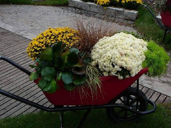 chrysanthemum-flowers- (6)
