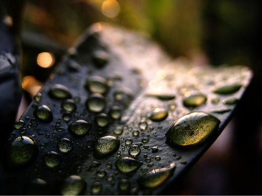 dew-drops- (11)