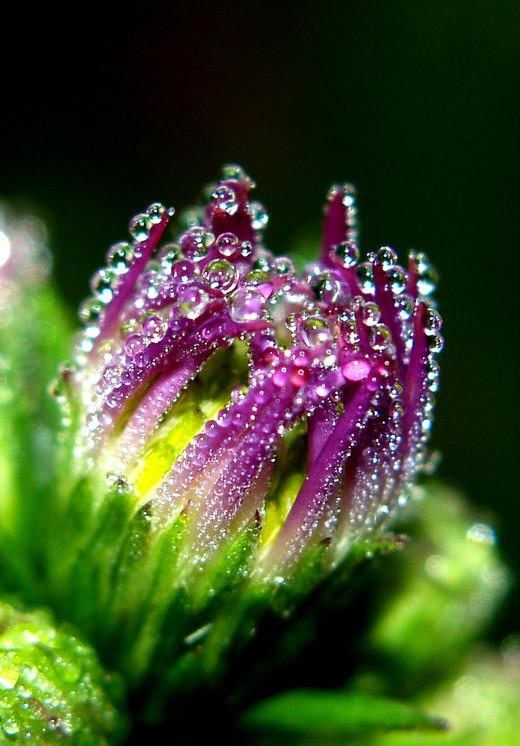 dew-drops- (21)