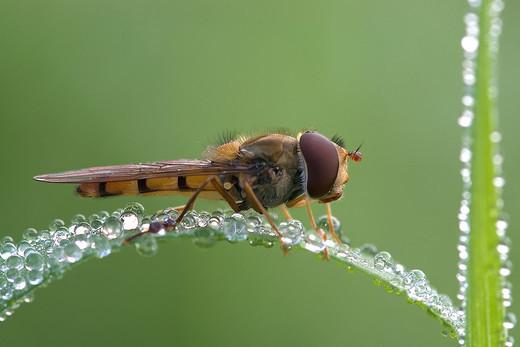 dew-drops- (9)
