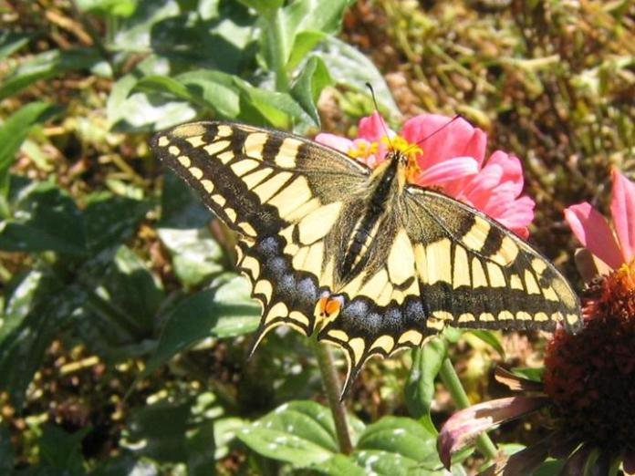 flowers-and-butterfly- (14)