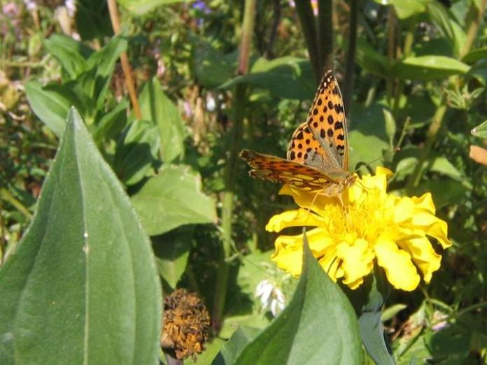 flowers-and-butterfly- (21)