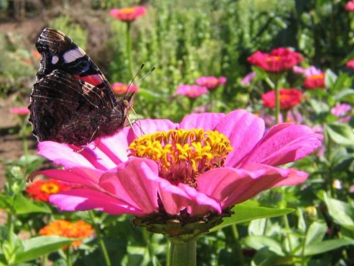 flowers-and-butterfly- (22)