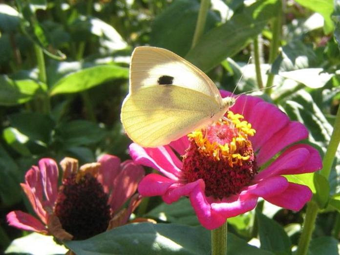 flowers-and-butterfly- (7)