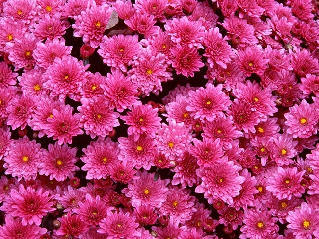 flowers-for-you- (6)