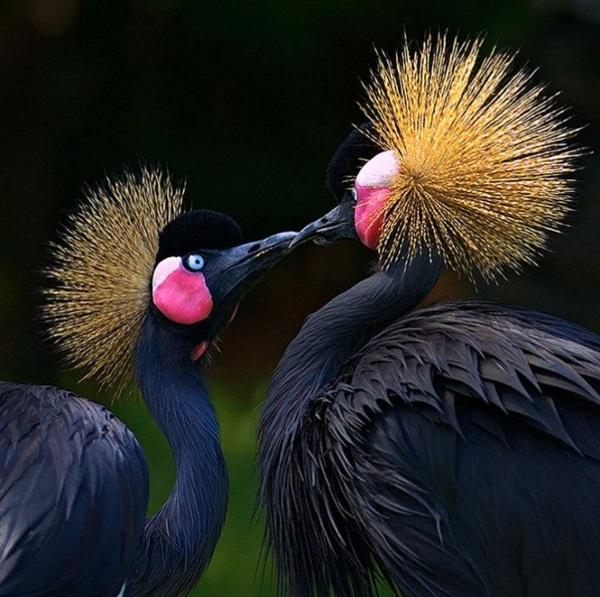 love-birds-kissing- (5)